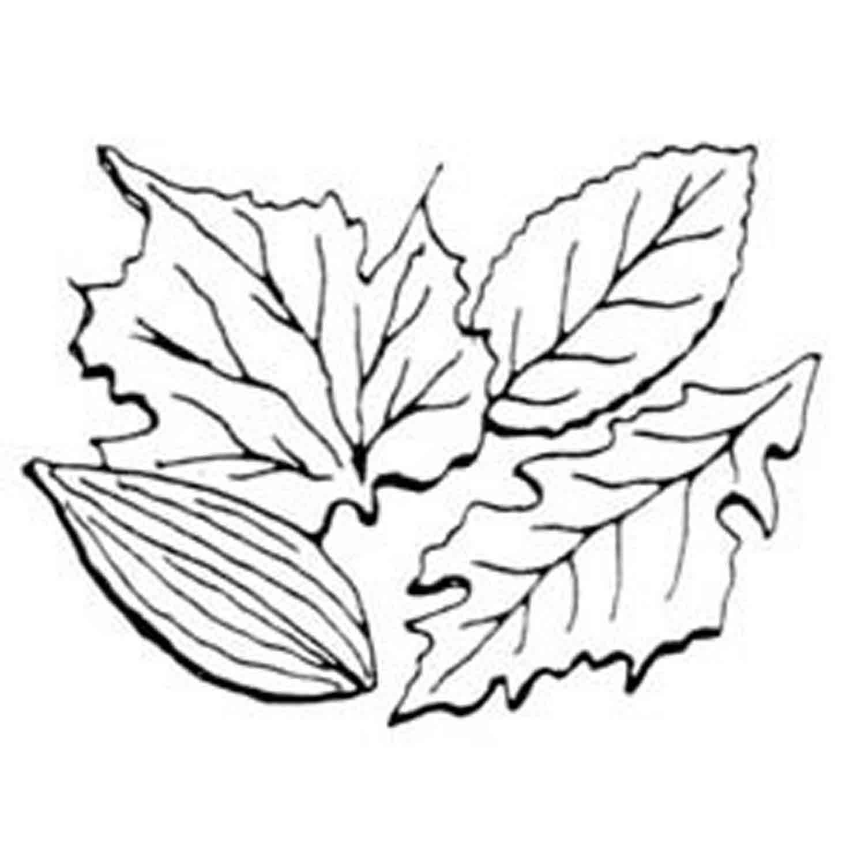 Gumpaste Leaf Veiner Set (A)