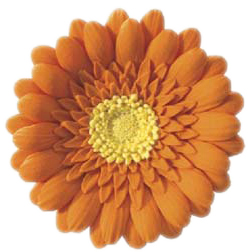 Orange Gum Paste Gerbera Daisy