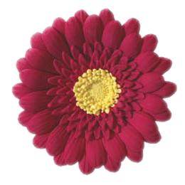 Red Gum Paste Gerbera Daisy
