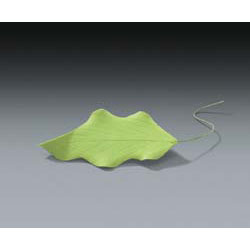 Gum Paste Green Leaves