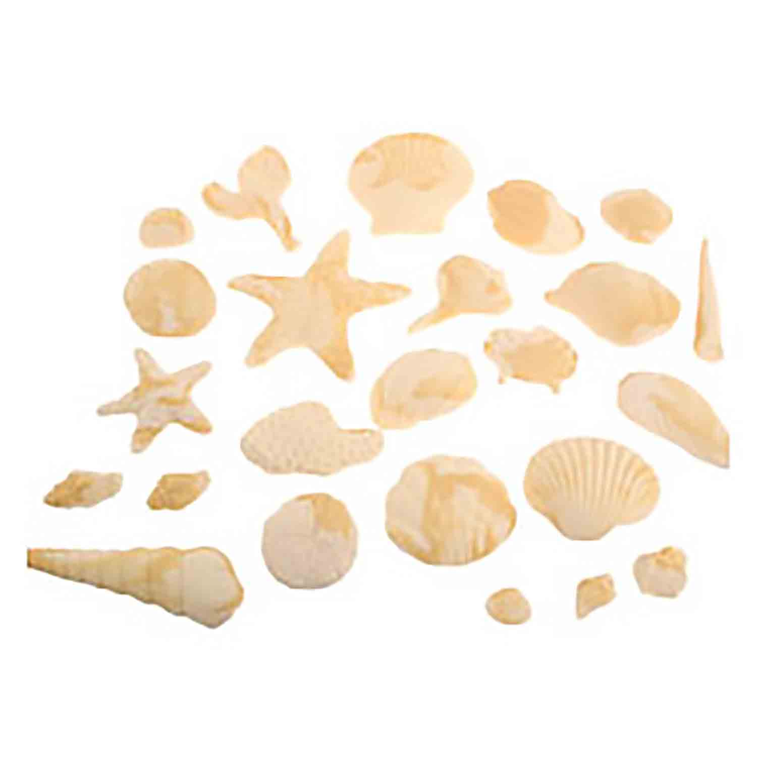 Marbled Fondant Sea Shell Assortment