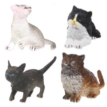 Kitten Assortment