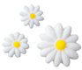 Dec-Ons® Molded Sugar - Daisy