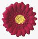 Red Gum Paste Gerbera Daisy