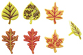 Fall Leaves Picks