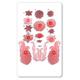 JEM Cutter - Floral Scrolls & Trims